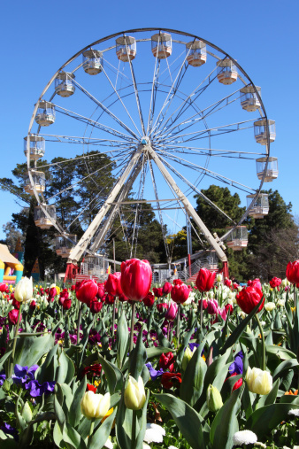 Floriade is a popular floral festival in Canberra © Getty Images