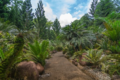 The Evolution Garden in Singapore shows what forests might have been like in the Jurassic ©Getty Images