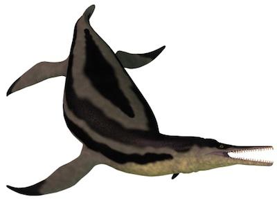 dolichorhynchops, a pliosaurid plesiosaur ©Getty Images