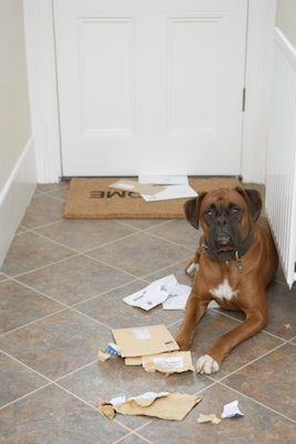 Bored dogs can be destructive. ©Getty Images