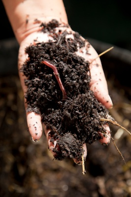 Earthworms are good for the soil ©Getty Images