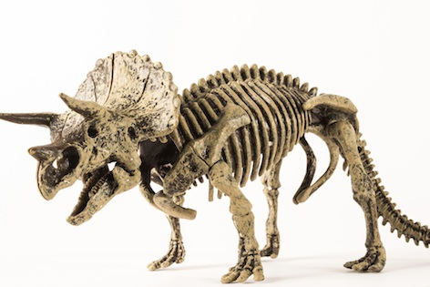 Triceratops skeleton: a giant 3D jigsaw puzzle for scientists ©Getty Images