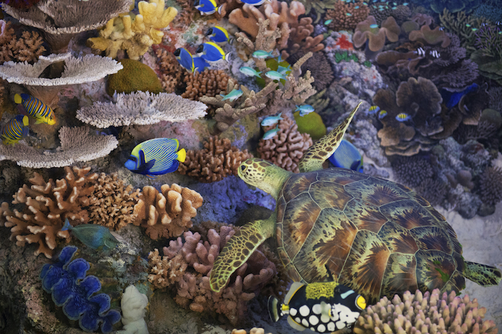 Colourful fish and other sea creatures live in coral reefs ©Getty Images