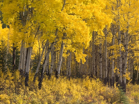Deciduous forest biome © Getty Images