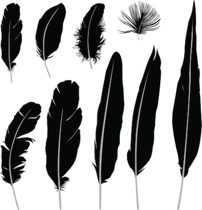 Different kinds of feathers ©Getty Images