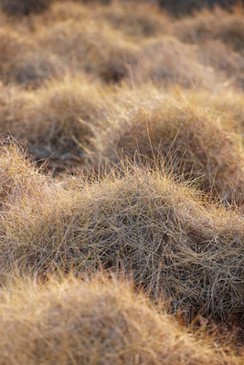 spinifex, Pilbara, Western Australia ©Getty Images