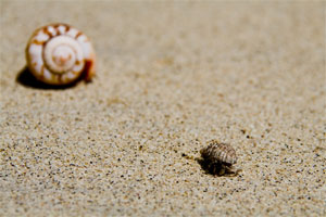 Wild hermit crabs ©Getty Images