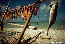 A catch of fish drying on a beach. Villagers near the sea can catch fish.