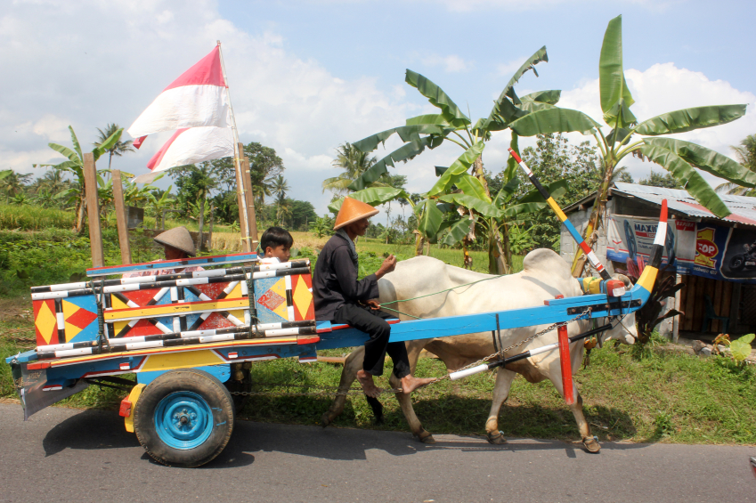 Ox drawn carts like this have been used on farms for hundreds of years. This one is decorated for a village celebration