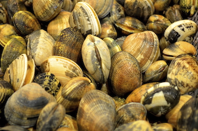 Clams are bivalves. Photo©iStock
