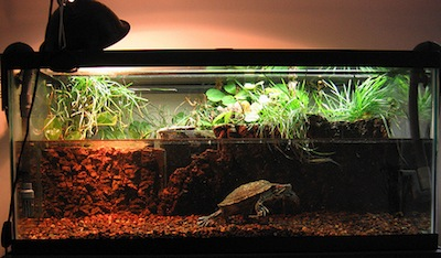 Indoor turtle tank