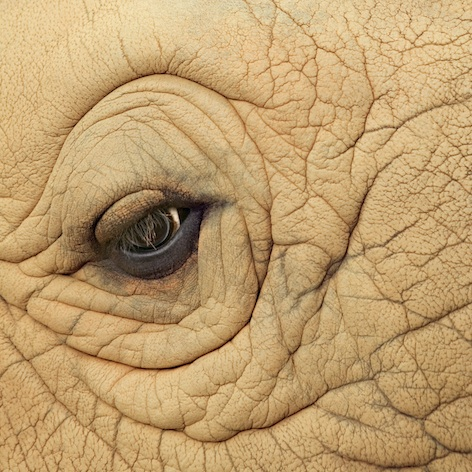 Rhino skin ©Getty Images