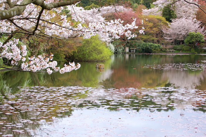 A pond in a Japanese garden. Getty Images