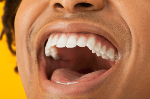 Teeth have a different shape for different jobs. Getty Images