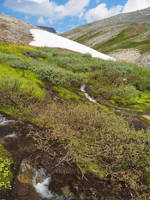 Alpine tundra in summer ©Getty Images