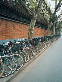 Many people ride bicycles, but are becoming less popular in big cities. Photo©kidcyber