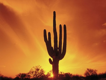 Cacti are plants adapted to a hot, dry environment. Getty