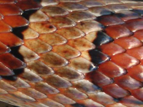 Snake scales. Getty Images