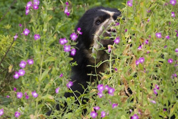 bear_specs_flowers_jup.jpg