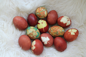 Dyed chicken eggs. Photo©iStock