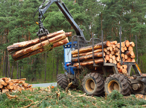 Logs are loaded onto trucks and taken to the saw mill ©iStock