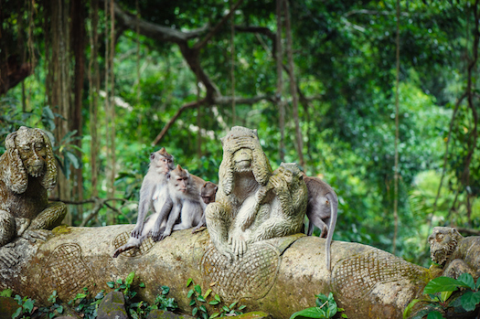 Long-tailed macaques live freely in the Monkey Forest in Ubud, Bali ©iStock