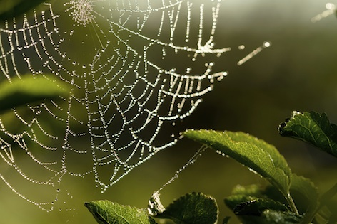 Dew hangs from a spider's web ©Getty.