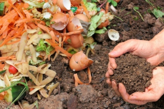 Worms have recycled kitchen scraps into compost for the garden ©Getty Images