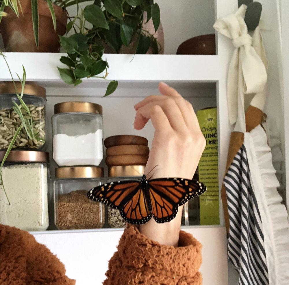 bring nature indoors -