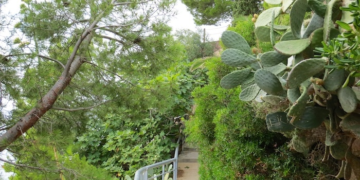 Pine, cactus and fig tree together
