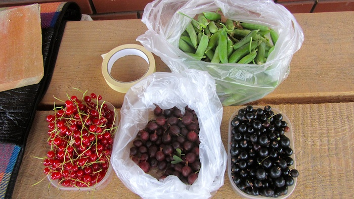 Freshly harvested red currant, gooseberry, black currant, and peas