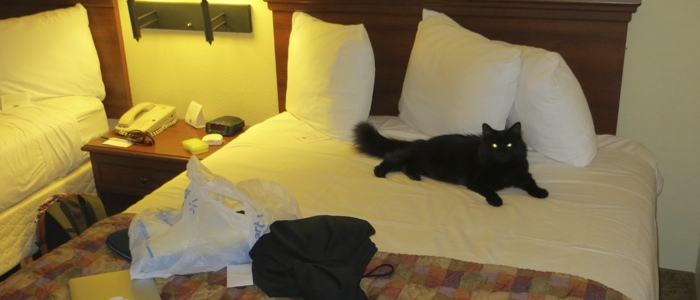 My sister's cat caling dibs on one of the beds. I guess I will take the floor