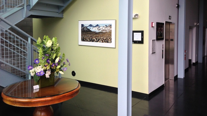 TripIt Lobby - complete with a picture of myriads of penguins in Antarctica