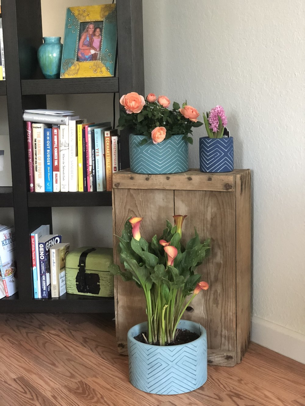 Pots from Target's OpalHouse line, plants from Trader Joe's