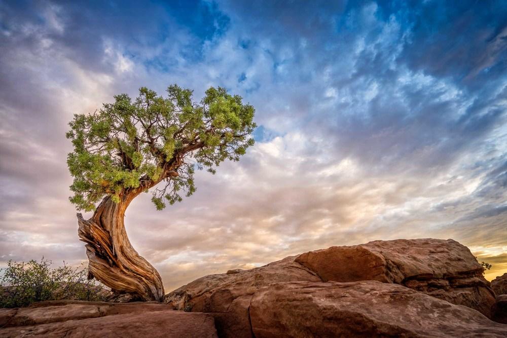 moab-dead-horse-point-juniper-sunrise-1.jpg