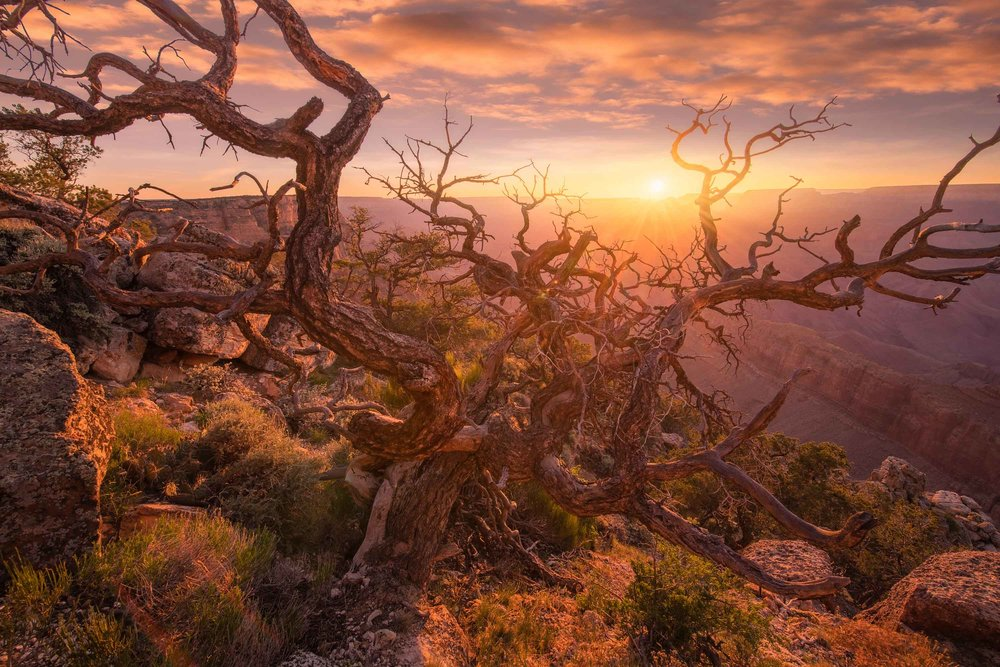 Twisted Tree Grand Canyon