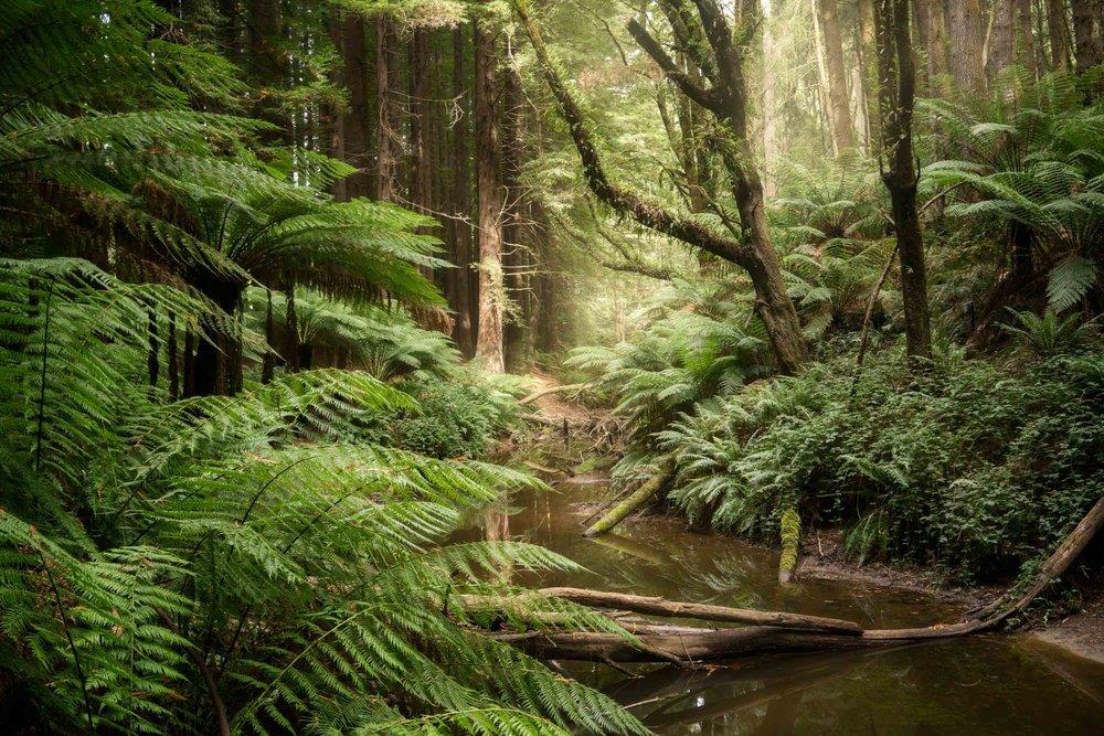Great Otway NP, Australia