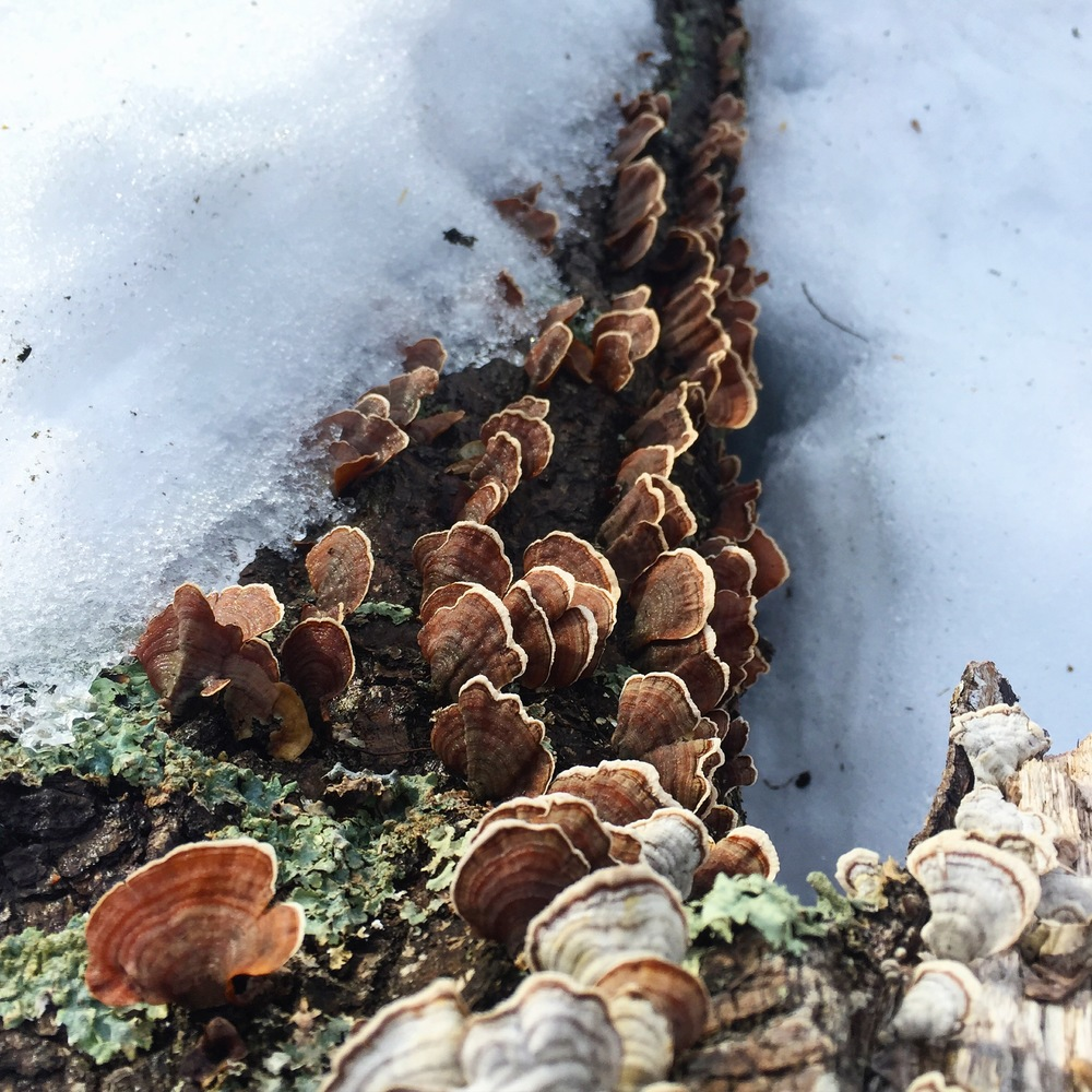 Mushrooms vs Snow