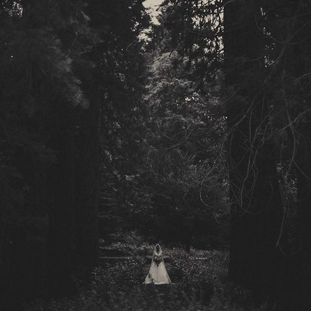 redwood cathedral and a stunning bride. @symonsees