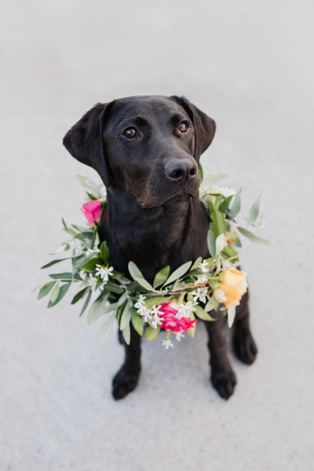 5 Ways To Include Your 'Furry' Family In Your Wedding Day! - WARNING - Pets in florals may cause melting hearts