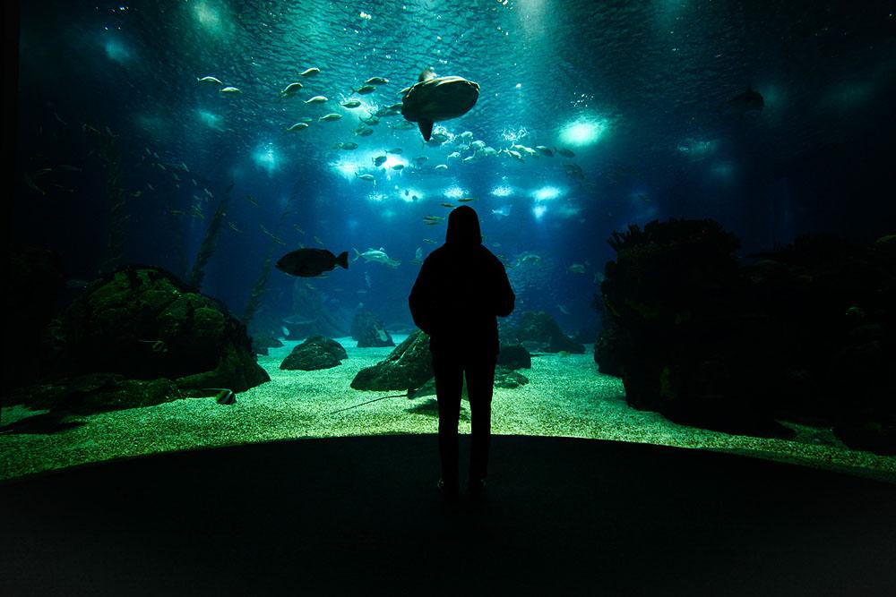 lisboa aquarium.jpg