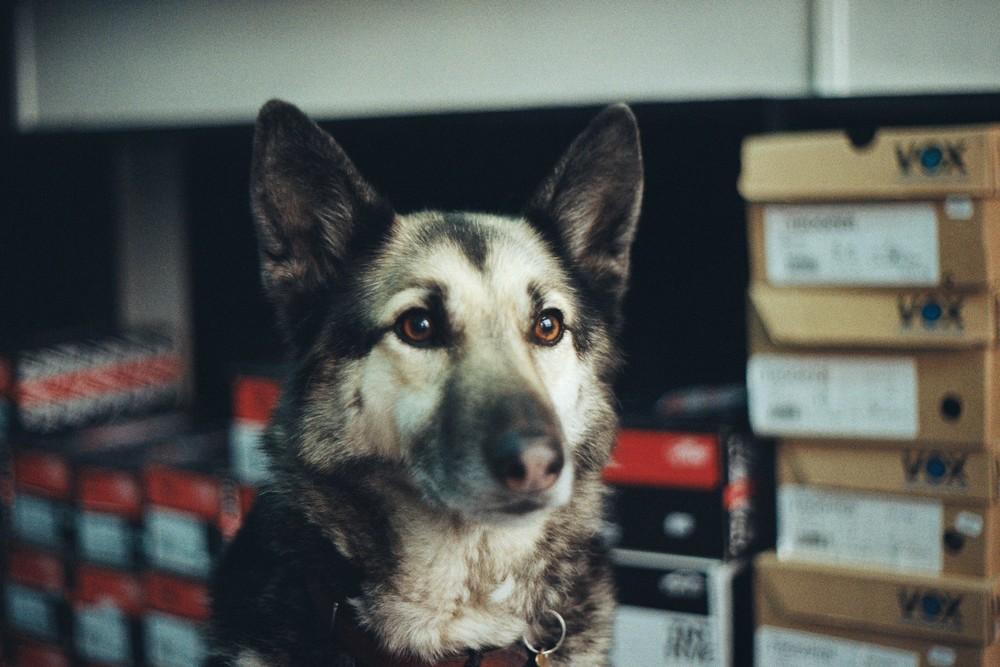Oscar-Juliens-dog-Transfert.jpg