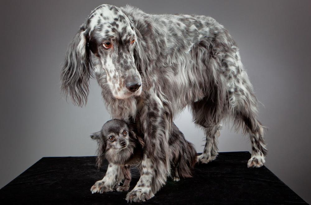 dogs_indoor_04.jpg