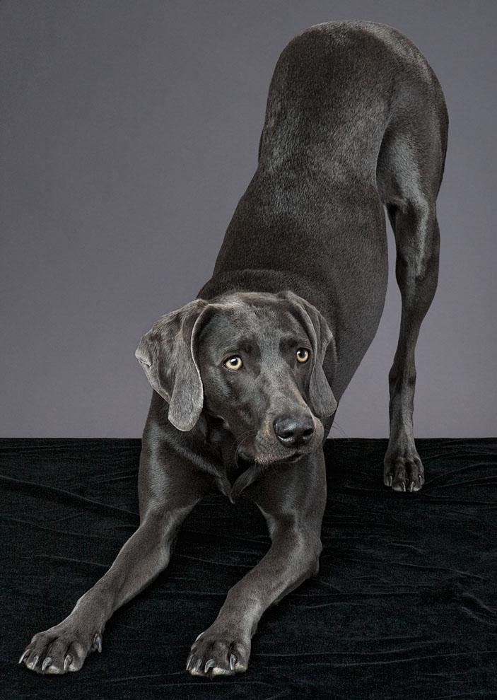 dogs_indoor_07.jpg