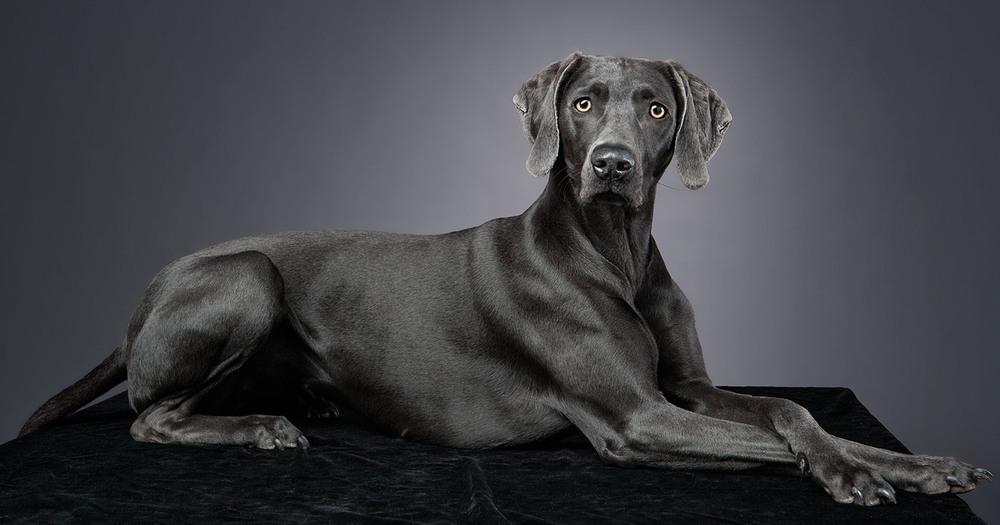 dogs_indoor_08.jpg