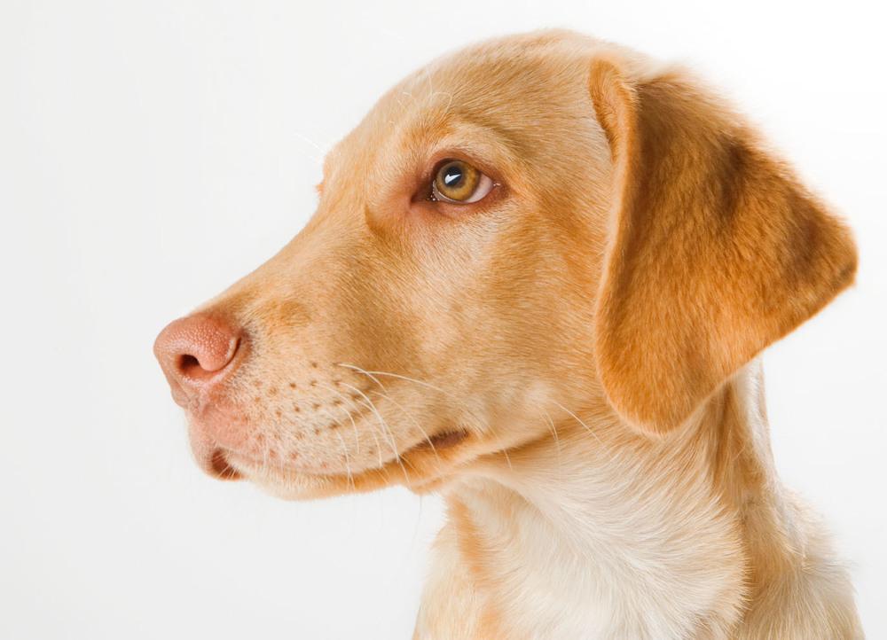 dogs_indoor_28.jpg