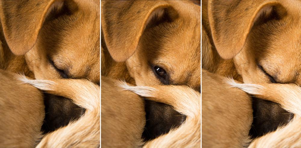 dogs_indoor_29.jpg