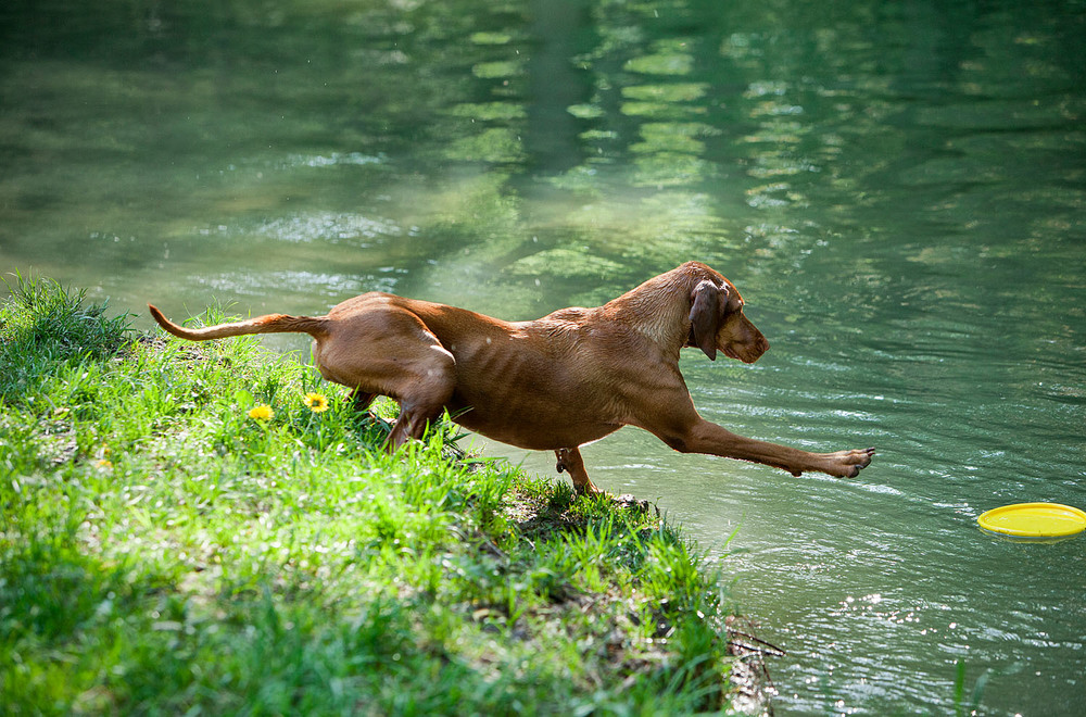 dogs_outdoor_08.jpg