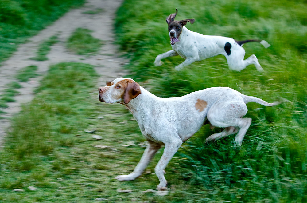 dogs_outdoor_09.jpg