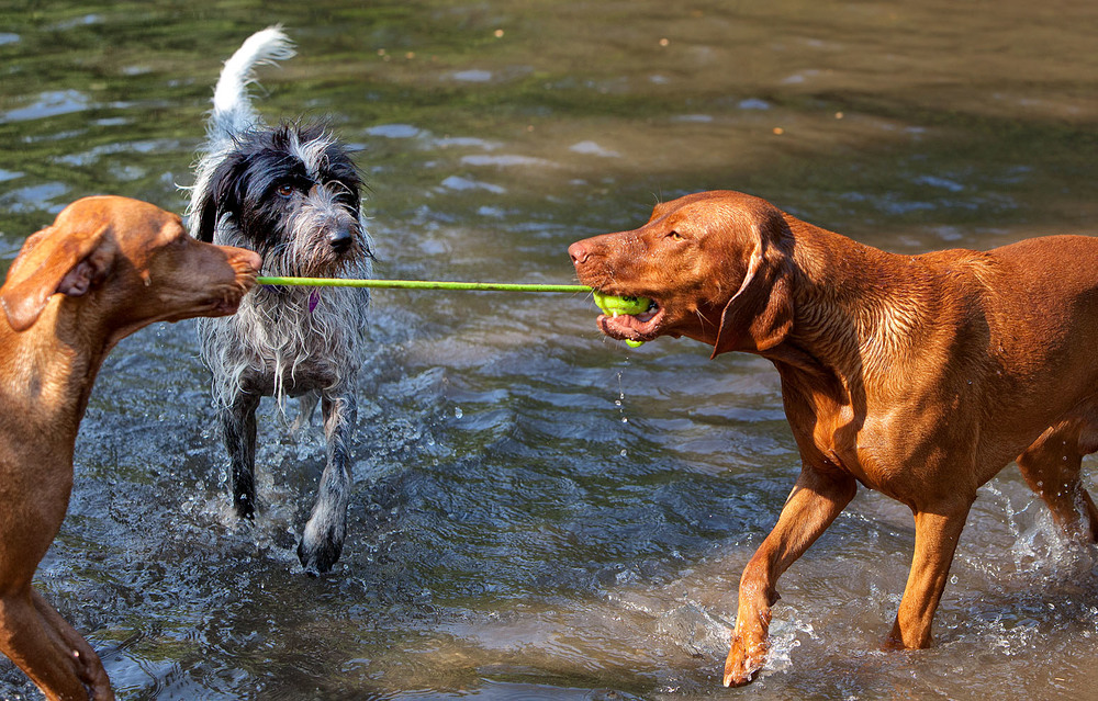 dogs_outdoor_33.jpg